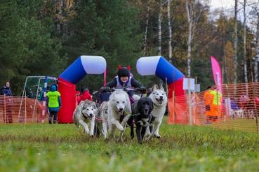 Ленинградские каюры выиграли гонки на собаках