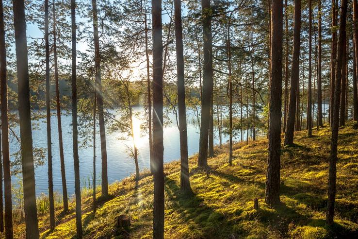 Область — в лидерах рейтинга качества управления лесами