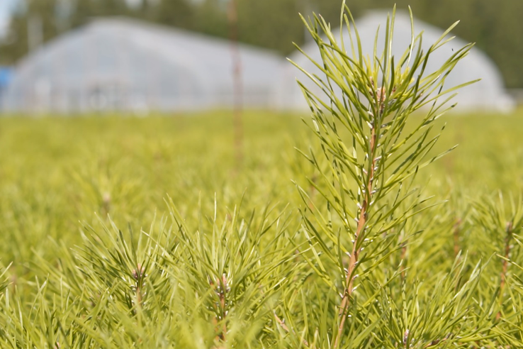 НАЦПРОЕКТЫ: лесной селекционный центр увеличивает мощности