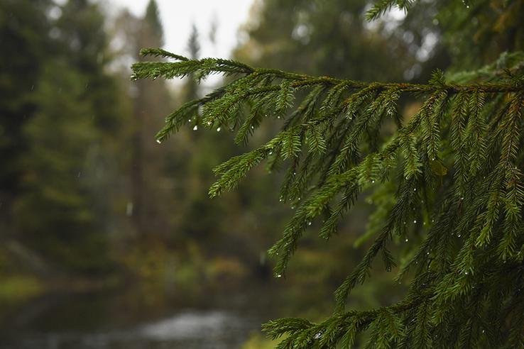 Ленинградская область сохраняет свои леса