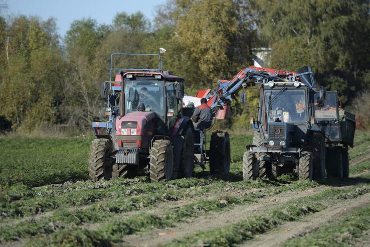 Ленинградская область собрала рекордный урожай