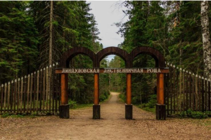 Ленинградцы получили президентский грант на экологию