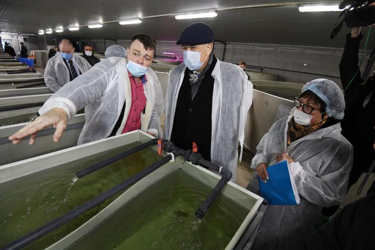 Область увеличивает производство осетровых рыб